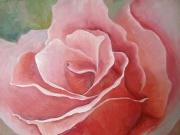 rose-flower