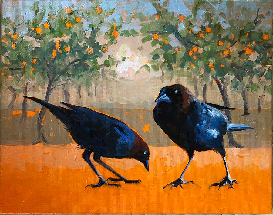 Brown Cowbirds in Orange Grove